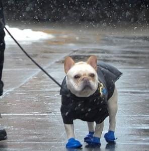 Hugh Jackman veste da neve il suo cane