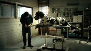 Dogman, un'inquietante clip del film di Matteo Garrone
