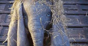 Dumbo, il full trailer del film diretto da Tim Burton